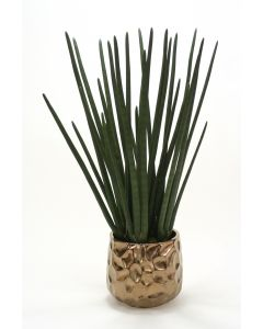 Sanseveria in Burnt Gold Gabbi Pot