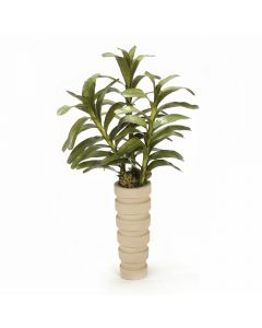 Dendrobium Plant with Succulents in Tall Planter