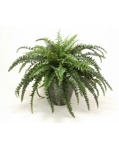 1951 - Boston Fern in Larg Black Orb Planter