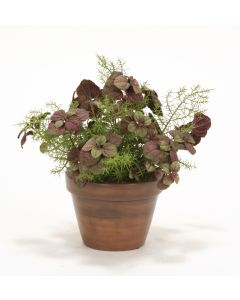 Mint Plant with Springerii Fern in Azalea Pot