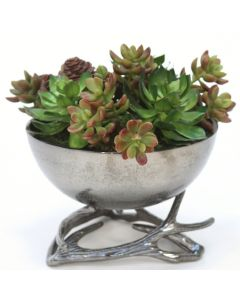 Mixed Succulents in Black Nickel Deer Horn Bowl