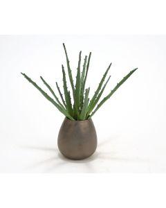 Aloe Plant in Bronze Sposa Vase