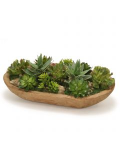 Succulent Garden in Wood Bowl