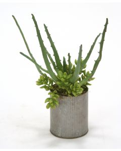 Aloe and Sedum in Grooved Tin Cylinder