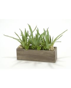 Aloe, Succulents in Rectangle Concrete Box