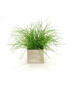 Grass in Aged Gray Wooden Box