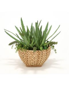 Aloe in Sea Grass Basket