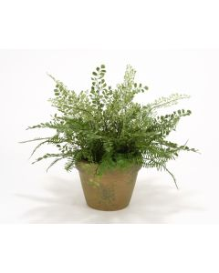 Maiden Hair and Asparagus Fern in Mossy Green Terra Cotta Pot