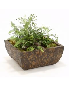 Ferns and Succulents in Square Crackled Deep Chocolate Stone Tray