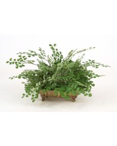 Maiden Hair Fern in Antique Brass Tray (Sold in Multiples of 2)