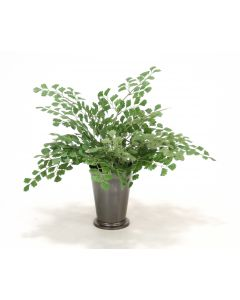 Maiden Hair Fern in Bronze Mint Julep Cup (Sold in Multiples of 4)