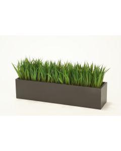 Grass in Rectangular Wood Box