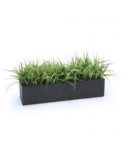 Grass in Black Box