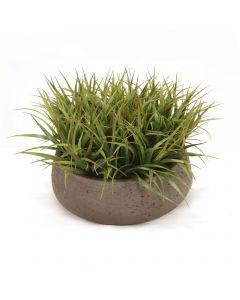 Grass in Round Chocolate Planter