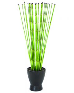 Snake Grass in Matte Black Zen Pot