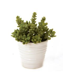 Succulents in White Format Vase