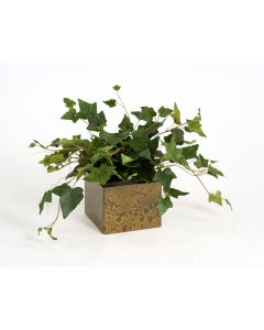 Hedera Ivy in Square Gold Pot