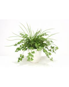 Greenery Assortment in Small Glossy White Plum Pot (Sold in Multiples of 2)