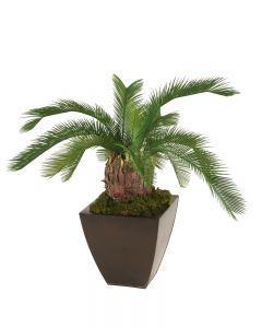 Cycas Palm Floor Plant in Bronze Metal Contempo Planter