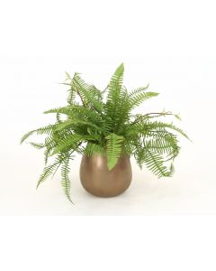 Mixed Fern in Small Bronze Earthenware Vase (Sold in Multiples of 2)