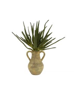 Agave Plant in Natural Navajo Water Jar with Handles