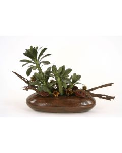 Aeonium Ciliatum Cactus, Cholla and Mushrooms in Metal Container