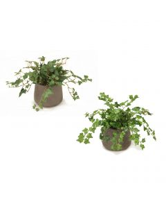 Mini  Ivy and Foliage Assortment, Each in 3-Footed Lacquered Brass Pot