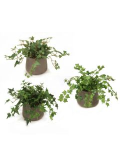 Mt Ivy in Chocolate Planters Set of 3