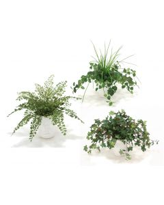Assorted Greenery in White Ceramic Planter (PK 3)