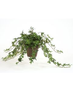 "Pittsburgh Ivy in 6"" Clay Pot (Sold in Multiples of 2)"
