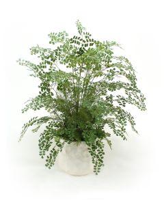 Maiden Hair Fern Floor Plant in Large White Gabbi Pot