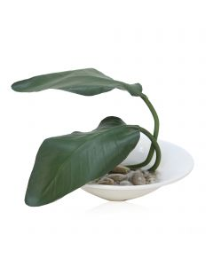 Bird of Paradise Leaf in White Glazed Saucer