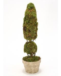 Cone and Ball Moss Topiaries in Select Designer Planters