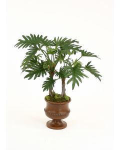 Philodendron Selloum Plant in Maple Finish Classic Urn