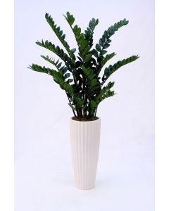ZZ Plant in White Highland Floor Vase