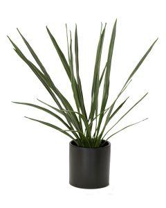 Cymbidium Orchid Blades In Matte Black Circle Pot (Min Pk2)