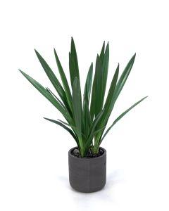 Cymbidium Orchid Blades in Black Wash Pot