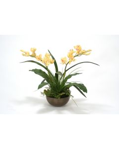 Pale Yellow Cymbidium Orchid Plants with Ferns in Metal Bronze Bowl