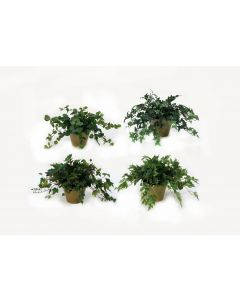 Greenery Assortment in Mossy Green Terra Cotta Pot (Sold in Multiples of 4)