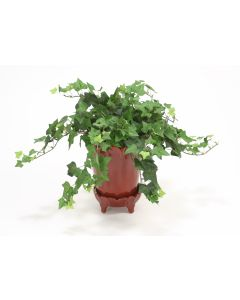 Medium Green Ivy Bush Vine in Ox Blood Pot with Saucer