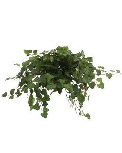 Swedish Ivy Topper in Terra Cotta Saucer (Pack 2)