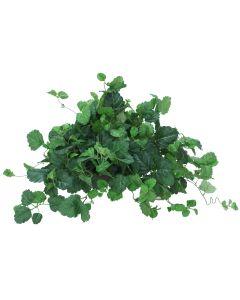 Swish Ivy (Pack 2)