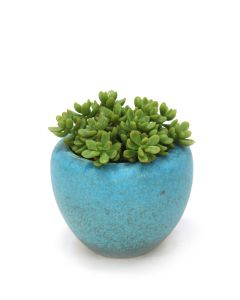Succulents In Turquoise Pot (Pack 2)