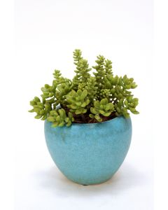 Short Succulents in Round Turquoise Pot