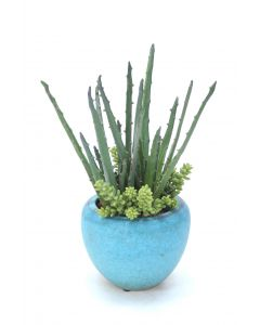 Aloe and Succulents in Turquoise Pot