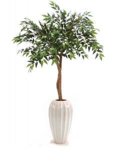 Ruscus Canopy Floor Plant in Tall White Fluted Ceramic Vase