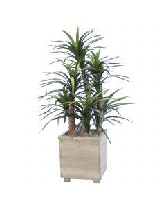 4ft Dracaena Tree in Gray Wood Planter