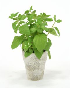 Basil Spray In Brushed Antique White Clay Pot