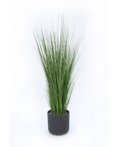 Grass in Black Wash Pot