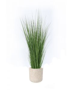 Grass in Grey Wash Pot